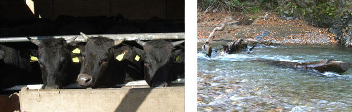 他の銘柄牛との違い